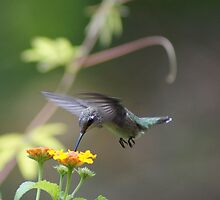 Summer Hummer II by BLemley