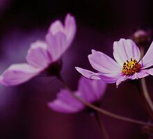 Cosmo After Glow by kkphoto1