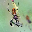 Golden-silk spider with Dragonfly catch by jozi1
