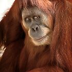 Wild Faces: Orang-utan by Christopher Ashdown