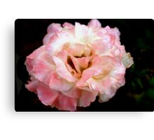Lightly rouged Canvas Print