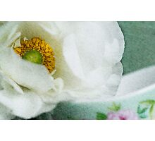 Anemone II Photographic Print
