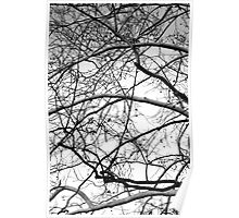 Web of Branches - black and white Poster