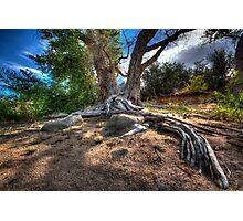 Rooting Around Photographic Print