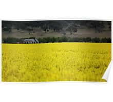 in the canola field Poster