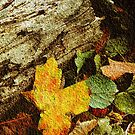 True Beauty of Fall © by Dawn M. Becker