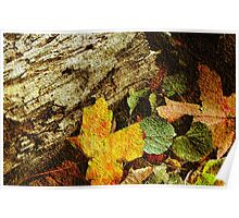 True Beauty of Fall © Poster