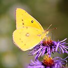Color Me Yellow  by NewfieKeith