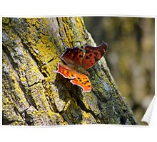 Another Butterfly..LOL Poster
