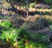 Web abstract by debsphotos