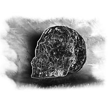 Black And White Skull On Transparent Background by Terri Waters