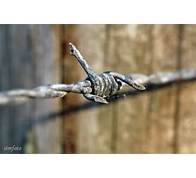 Barbed wire Gembrook Winery Photographic Print