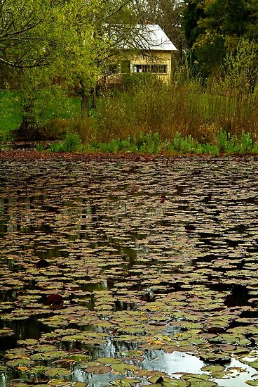 Lilies, Jubilee Lake, Daylesford by Joe Mortelliti