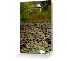 Lilies, Jubilee Lake, Daylesford Greeting Card