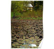 Lilies, Jubilee Lake, Daylesford Poster