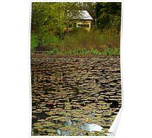Lilies, Jubilee Lake, Daylesford Poster