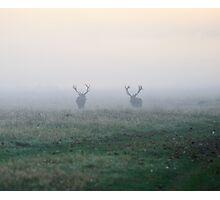 Two Bucks at Dawn Photographic Print