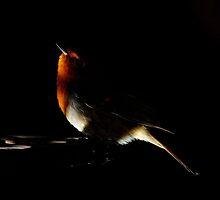 Red light by Nigel  Dean