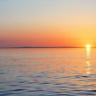 Swans Sunset by David Alexander Elder