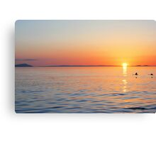 Swans Sunset Canvas Print