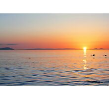 Swans Sunset Photographic Print