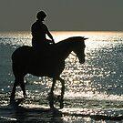 Seahorse - Hunstanton, Norfolk by Beverley Barrett