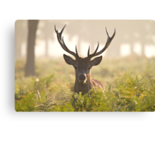Morning Stag Canvas Print
