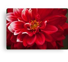 Touch of White Canvas Print