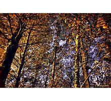 Autumn Sunlight Photographic Print
