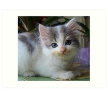 Ta Dah, introducing Lacy's kitten...Shiver! Art Print