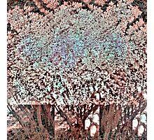 P1440115-P1440118 _P1440137 _GIMPº Photographic Print
