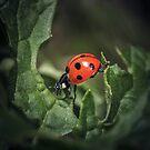 Ladybird by Rustyoldtown