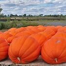 Pumpkins by mikepaulhamus