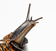 Snail by Keith Stocks