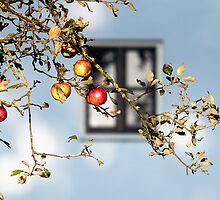Eva fruit by THHoang