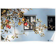 Eva fruit Poster