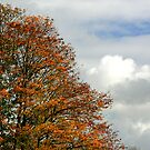 Trees and Clouds by GlennB