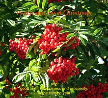 Red Rowan Berries Christmas Card by BlueMoonRose