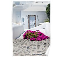 Whitewash and Flowers in Cyclades Greece Poster