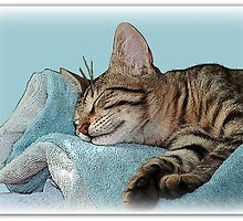 Rock a by baby - Sleeping cat by Einna