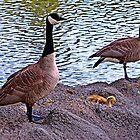 Springtime Geese by Tamara Valjean