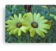 Yellow Couple Canvas Print