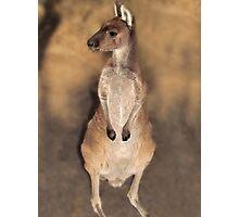 Where's My Momma? Peel Zoo, Pinjarra, Western Australia Photographic Print