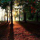 Misty Sunrise by GlennB