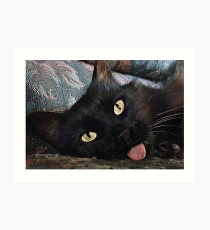 Stray Cats Art Print