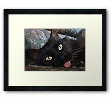 Stray Cats Framed Print