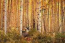 Forest Monarch by Wojciech Dabrowski