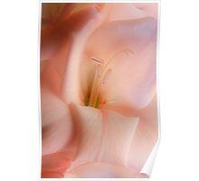 Peach Blush Poster