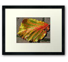 Autumnal Leaf Framed Print