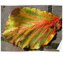 Autumnal Leaf Poster